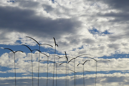 Vögel / Foto: Winfried Junker- Schönfelder